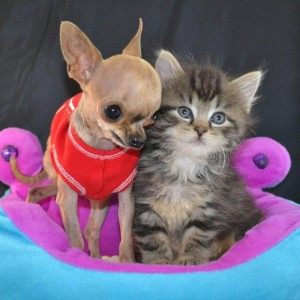 Kitten & Dog Mia with repaired Cleft Lip